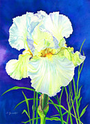 White Iris Print by Barbara Jewell