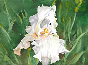 White Iris Print by Spencer Meagher