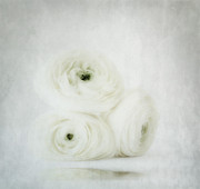 White Tapestries Textiles Prints - White Print by Kristin Kreet