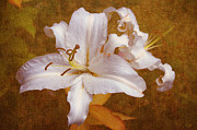 Caress Prints - White Lilies. Time to be Romantic Print by Jenny Rainbow
