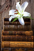 Lilies Photos - White lily on antique books by Garry Gay