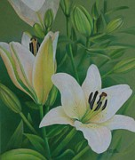 Blooming Drawings Originals - White Lily by Pamela Clements