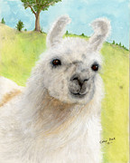 Juniper Paintings - White Llama Freckles Camelid Farm Animal Art by Cathy Peek