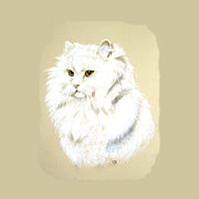 Persian Cat Pastels Posters - White Long Hair Cat Poster by Jeanie Beline