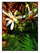White Maui Flowers Print by Joan  Minchak