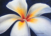 Kristine Mueller Griffith - White Night Plumeria