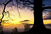 White Oak At Sunrise Print by Thomas R Fletcher