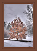 Ed Cilley - White Oak in Fog  Framed