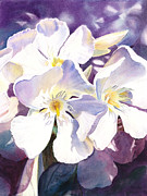 Blooming Paintings - White Oleander by Irina Sztukowski