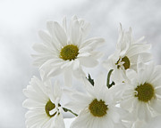 Katie Abrams - White on White Daisy