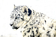 Snow Leopards Prints - White On White Print by Emily Stauring