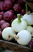 Home Grown Metal Prints - White Onions and Red Potatoes Metal Print by Julie Palencia
