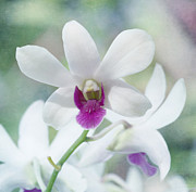 Garden Flowers Photos - White Orchid by Kim Hojnacki
