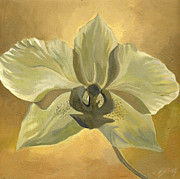 Alfred Ng - white orchid with ochre