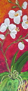 Lancaster Artist Metal Prints - White Orchids on Red Metal Print by Paris Wyatt Llanso
