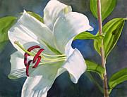 Sharon Freeman - White Oriental Lily