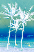 Cabanas Prints - White Palms Print by Debra and Dave Vanderlaan