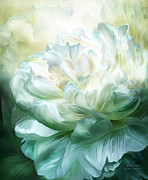 Carol Cavalaris Art - White Peony by Carol Cavalaris