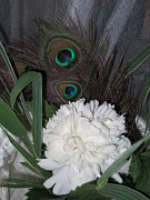 Pamela Funk - White Peony With Peacock...