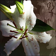 Stamen Digital Art - White Petals by Ginny Schmidt