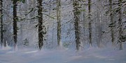 Ken Ahlering - White Pines