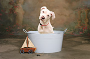 Bull Terrier Art - White Pitbull Puppy Portrait by James Bo Insogna
