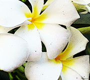 Plumerias Digital Art Prints - White Plumeria Art - Tropical Breeze Print by Sharon Cummings