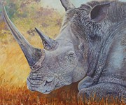Carolinestreet Posters - White Rhino Poster by Caroline Street