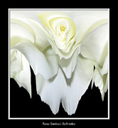 Avant Garde Photograph Acrylic Prints - White Rose Abstract Acrylic Print by Rose Santuci-Sofranko