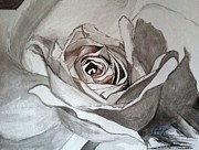 Rose Drawings Prints - White rose Print by Asuncion Purnell
