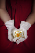 Holding Flower Posters - White Rose Poster by Joana Kruse