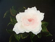 Rose Posters - White Rose Poster by Joni McPherson