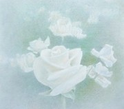 Atmospheric Drawings Prints - White Roses Print by Mark  Leavitt