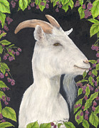 Eating Paintings - White Sanaan Goat Blackberry Patch Farm Ranch Animal Art by Cathy Peek