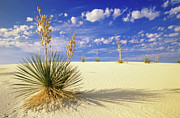 Travel Photo Prints - White Sand Blue Sky Print by Bob Christopher