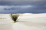 Slide Posters - White Sands Dark Sky Poster by Bob Christopher