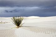White Sands Dark Sky Print by Bob Christopher