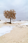 Awesome Prints - White Sands Lone Tree Print by Brian Harig
