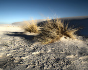 White Sands New Mexico Among The Dunes Print by Gregory Dyer