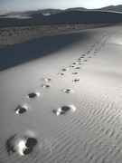 White Sands New Mexico Footsteps Print by Gregory Dyer
