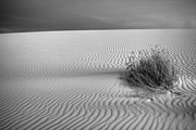 Scrub Brush Framed Prints - White Sands Scrub BW Framed Print by Peter Tellone