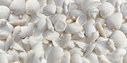 Beach Combing Posters - White Seashells and Pearls 2 Poster by Jennie Marie Schell