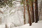 Winter Scene Metal Prints - White Silence Metal Print by Jenny Rainbow