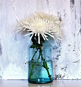 Floral Still Life Prints - White Spider Mums in Aqua Jar Print by Marsha Heiken