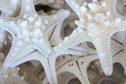 Patterns Prints - White Starfish Print by Carol Groenen