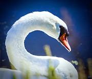David Millenheft - White Swan profile