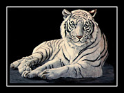 Black And White Cats Posters - White Tiger Poster by DiDi Higginbotham