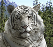 Siberia Digital Art - WHITE TIGER in its FOREST HABITAT by Daniel Hagerman