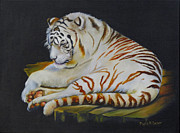Claw Paintings - White Tiger Sleeping by Phyllis Beiser