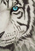 Tanya Arends - White Tiger